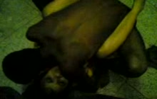 Indian girl fucked on the floor