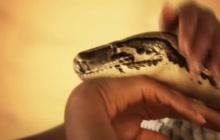 Seductive dance wtih snake